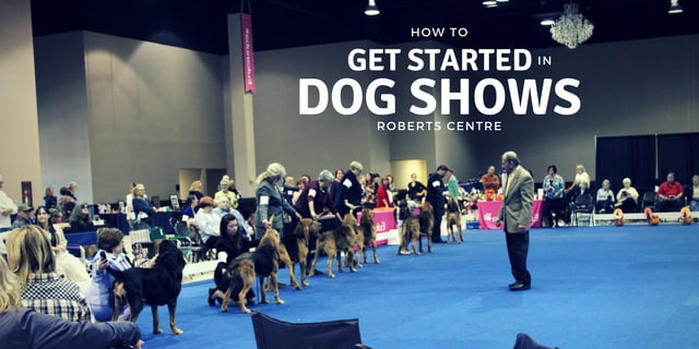 DOG SHOWS 1-min