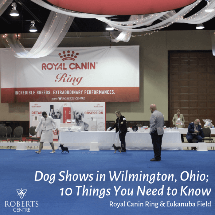 Dog shows in Wilmington Ohio, 10 Things you Need to Know